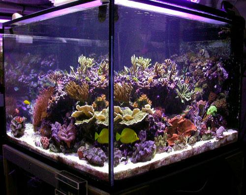 Pump Reef Tank Water Water Pumps